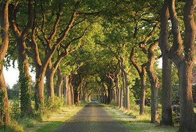 Land der Hügel und alten Bäume – Region Mecklenburgische Schweiz